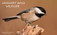JANUARY 2012 WILDLIFE